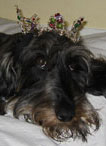 Dog with Tiara